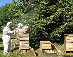 Bee keeping-पैसा कमाने के तरीके
