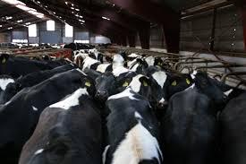 Milk dairy - कमाई के साधन